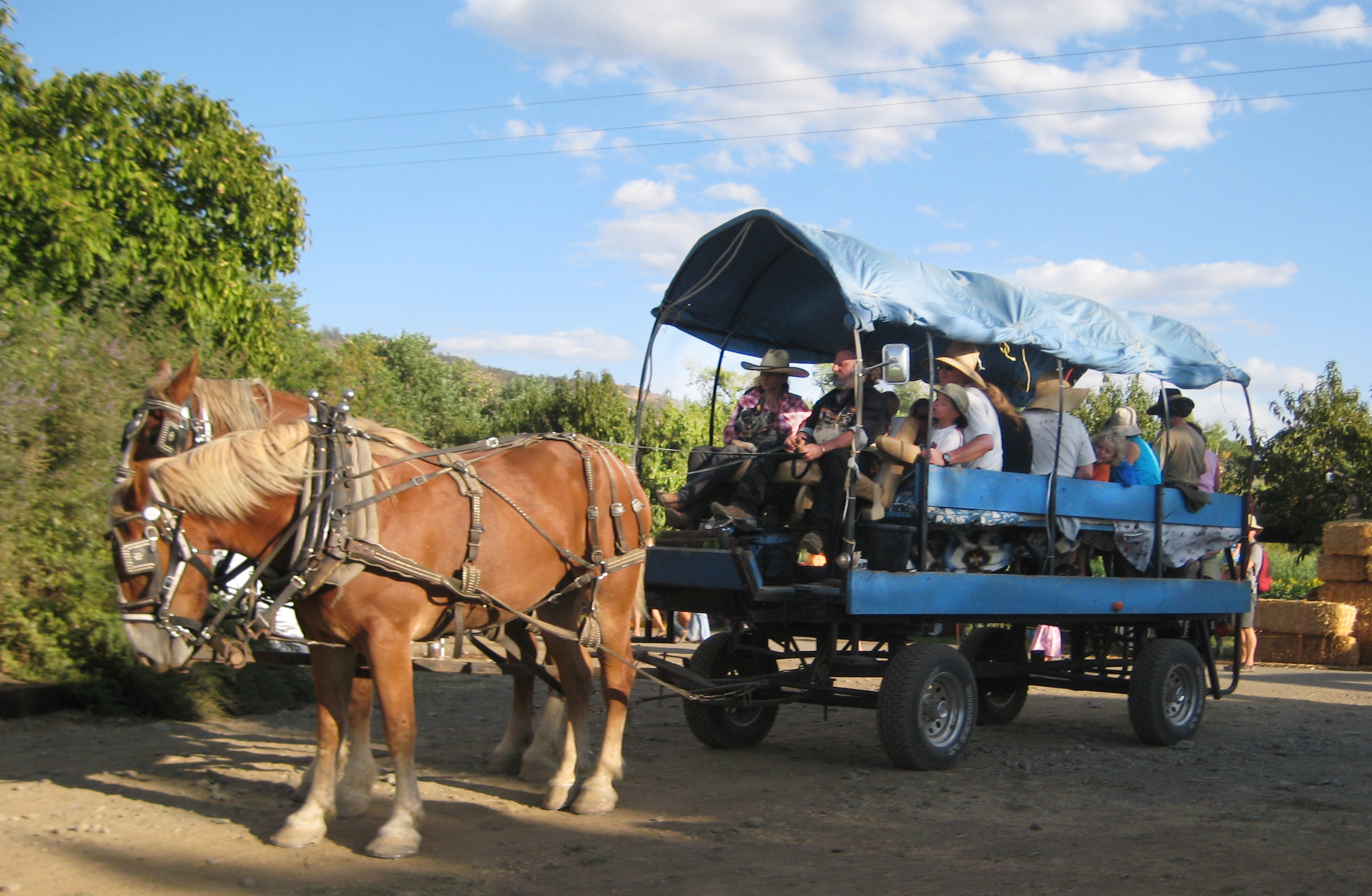 Horse-drawn wagon at Full Belly Farm Hoes Down Harvest Fest