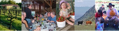 Photo stitch of agriculture farm activities
